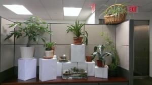 Plant Sale Pic 1