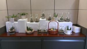 Plant Sale Pic 2