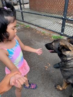Girl pets police dog